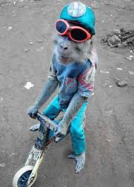 scooter monkey