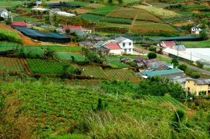 SAM_1009-agriculture