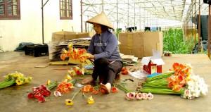 SAM_1037-lady packaging flowers