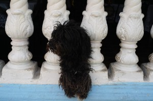 SAM_6985-puppy
